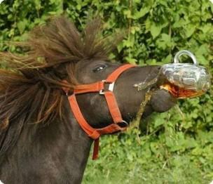 horse-beer-523x451